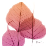 Bo Tree Pink Orange Fine Art Print