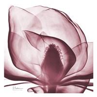 "Magnolia Marcela by Albert Koetsier - 13"" x 13"", FulcrumGallery.com brand"