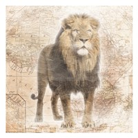 African  Animals - Lion Fine Art Print