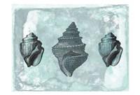 """Ocean Beauty 2 by Sheldon Lewis - 19"""" x 13"""""""