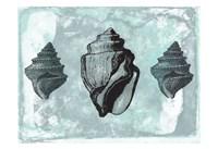 Ocean Beauty Framed Print