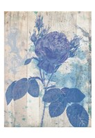 Blue Rose In My Garden Fine Art Print