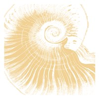 "Nautical Shell by Sheldon Lewis - 13"" x 13"""