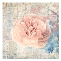 """Vintage Pink Romance by Sheldon Lewis - 13"""" x 13"""""""