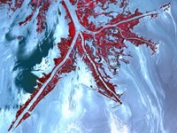 False Color Satellite View of the Very tip of the Mississippi River Delta Fine Art Print