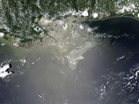 Oil  in the Gulf of Mexico - various sizes