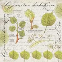 Botanical Jardins Fine Art Print