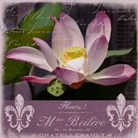 Lotus Bloom Fine Art Print