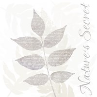Nature Set Leaves by Andrea Haase - various sizes, FulcrumGallery.com brand