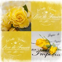 Yellow Roses by Andrea Haase - various sizes