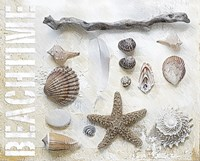 Sea Shell Collage I by Andrea Haase - various sizes