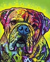 Hey Bulldog Fine Art Print