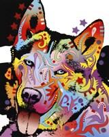Siberian Husky 1 Fine Art Print