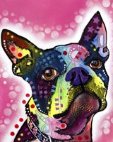 Boston Terrier Fine Art Print