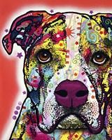 American Bulldog 2 Fine Art Print