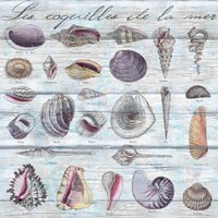 Les Coquilles Pattern Wood by Andrea Haase - various sizes
