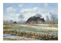Tulip Fields at Sassenheim Fine Art Print