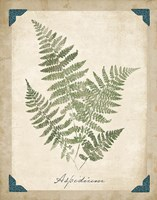 Vintage Ferns IX by Wild Apple Portfolio - various sizes