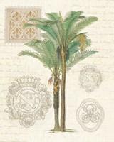 Vintage Palm Study II Fine Art Print