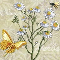 Herbs 3 Chamomile by Megan Duncanson - various sizes