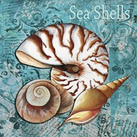 Sea Shells by Megan Duncanson - various sizes