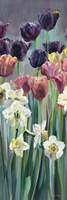 Grape Tulips Panel II by Marilyn Hageman - various sizes