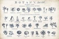Botany Tab VIII Indigo and White by Wild Apple Portfolio - various sizes