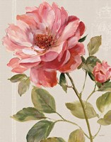 Harmonious Rose Linen by Lisa Audit - various sizes, FulcrumGallery.com brand