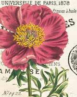 Peony Botany by Sue Schlabach - various sizes