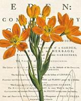 Euphorbia Botany Fine Art Print