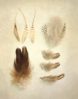 Feathers II by Elizabeth Urquhart - various sizes