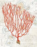 Textured Coral IV Fine Art Print
