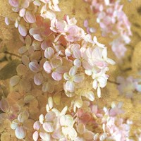 Gilded Hydrangea I by Sue Schlabach - various sizes