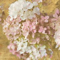 Gilded Hydrangea II by Sue Schlabach - various sizes