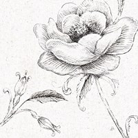 Blossom Sketches II by Daphne Brissonnet - various sizes