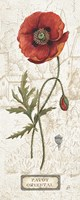 Royal Garden IV Framed Print