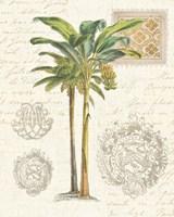 Vintage Palm Study I Framed Print