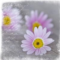 Daisy Days by Andrea Haase - various sizes