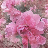 Fresh Rose I Fine Art Print