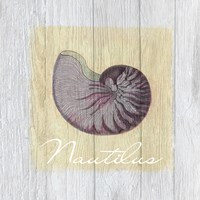 Vintage Shells 3 by Andrea Haase - various sizes