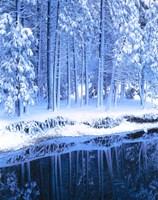 Winter, Conifers, Merced River, Yosemite Valley CA Fine Art Print