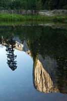 Reflection of El Capitan in Mercede River, Yosemite National Park, California - Vertical Fine Art Print