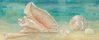 Horizon Shells Panel II Fine Art Print
