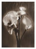 Calla Bouquet Fine Art Print