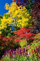 Autumn Color, Butchard Gardens, Victoria, British Columbia, Canada Fine Art Print