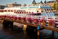 British Columbia, Victoria harbor, Undersea Gardens Fine Art Print