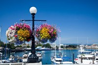 British Columbia, Victoria, Boat Harbor Fine Art Print