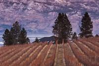 Vineyard and lake, West Kelowna, Okanagan Valley, British Columbia, Canada by Walter Bibikow - various sizes