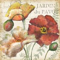 Spice Poppies Histoire Naturelle II Fine Art Print