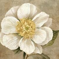 Up Close Cream Rose Fine Art Print